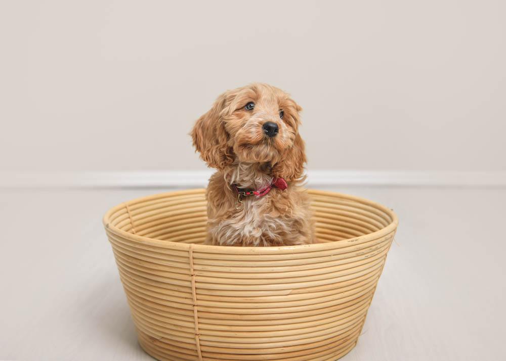 Nottingham studio dog photography